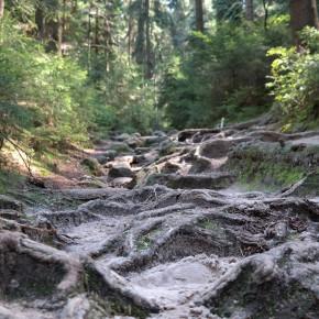 Märchenhafte Wälder Sächsische Schweiz