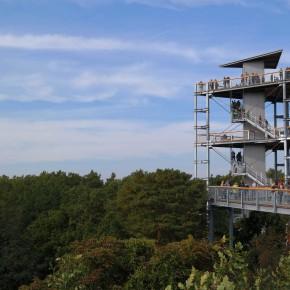 Blick vom Baumkronenpfad zum Aussichtsturm.
